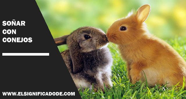sonar con conejos