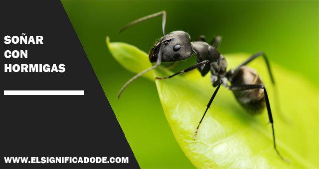 sonar con hormigas