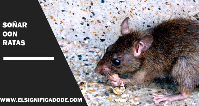 Soñar-con-ratas