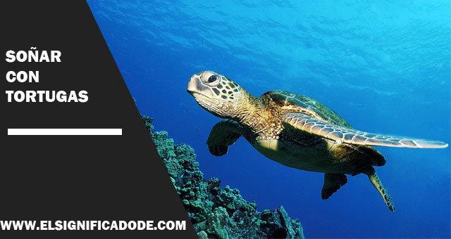 Soñar-con-tortugas