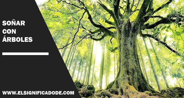 Cual Es El Significado De Soñar Con árboles
