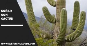 Significado de soñar con cactus