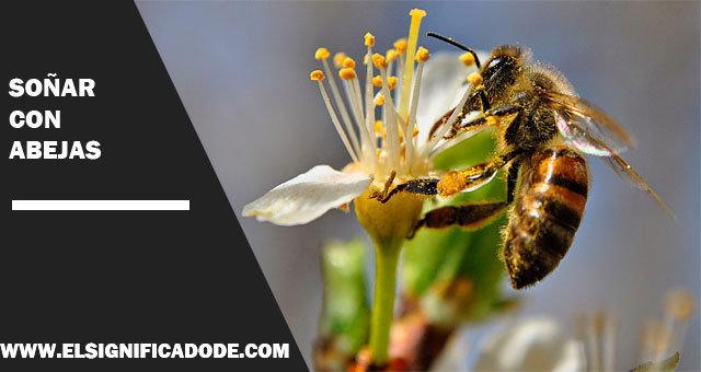 Soñar-con-abejas