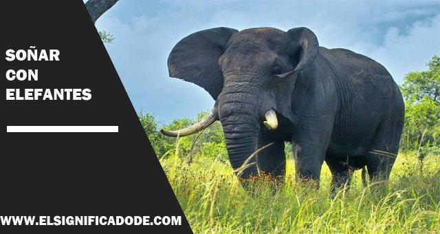 Significado De Soñar Con Elefantes