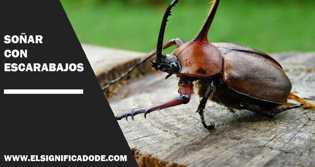 Soñar-con-escarabajos