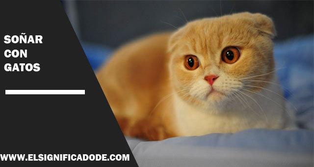 Soñar-con-gatos