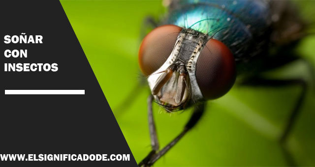 Soñar-con-insectos