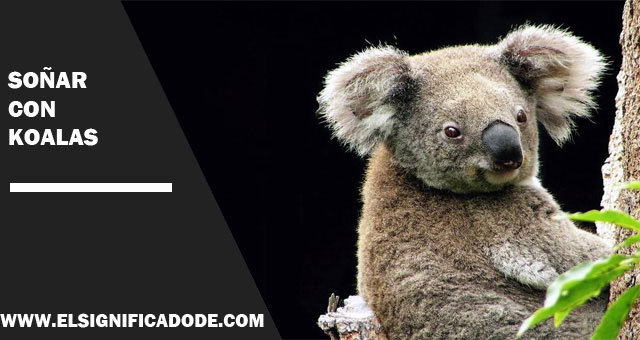Soñar-con-koalas