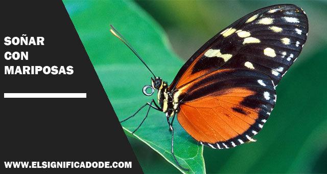 Interpretación Y Significado De Soñar Con Mariposas