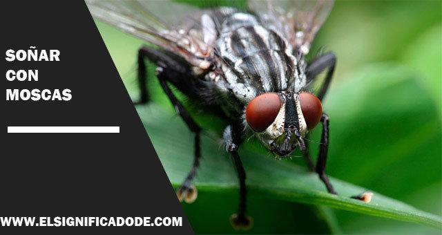 Soñar-con-moscas
