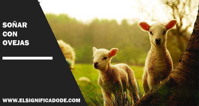 Soñar con una ovejas