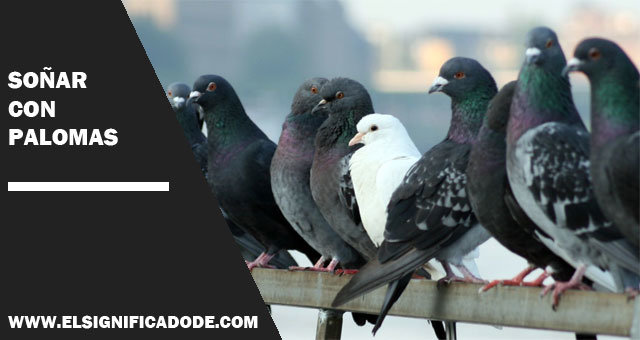 Soñar-con-palomas