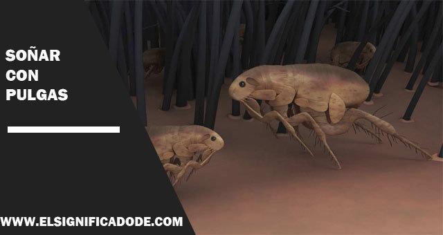 Soñar-con-pulgas