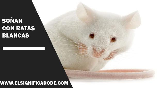 Soñar-con-ratas-blancas