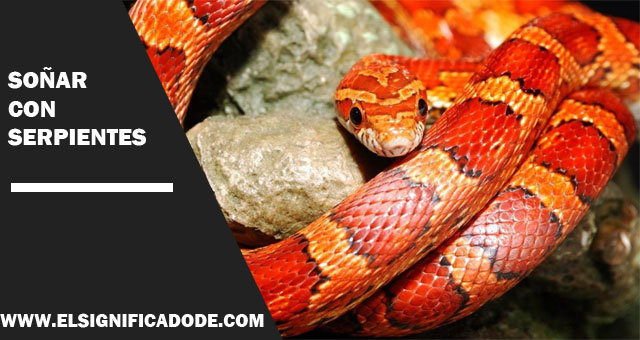 Significado De Soñar Con Serpientes Te Lo Contamos Todo