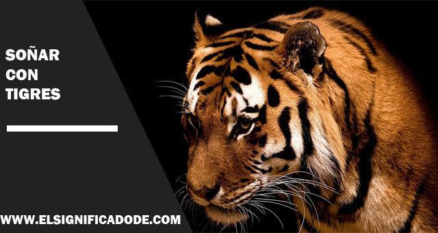 Soñar-con-tigres