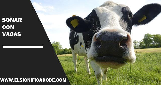 Soñar-con-vacas